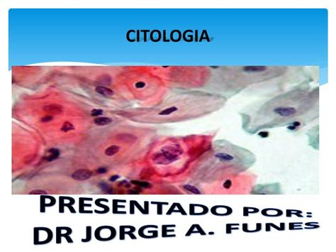 PPT - CITOLOGIA PowerPoint Presentation - ID:2005877